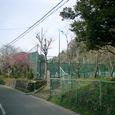 49)帰り道。「永福寺(ようふくじ)跡」近隣のテニスコートと梅。